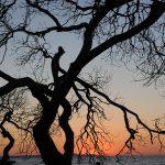 tree-675073_1920