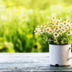 Acupuncture in Michigan Spring Detox